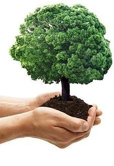 ambiente_albero_mano_w